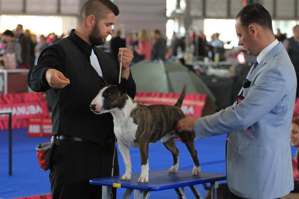 Tenkes Kapitánya Bandita (Buddy) - Brno (CZE) - European Dogshow