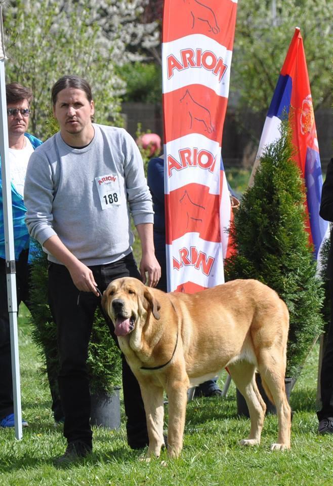 Irma De Tierra De Orbigo (Irma) - Hungária Junior Champion (HJCH)